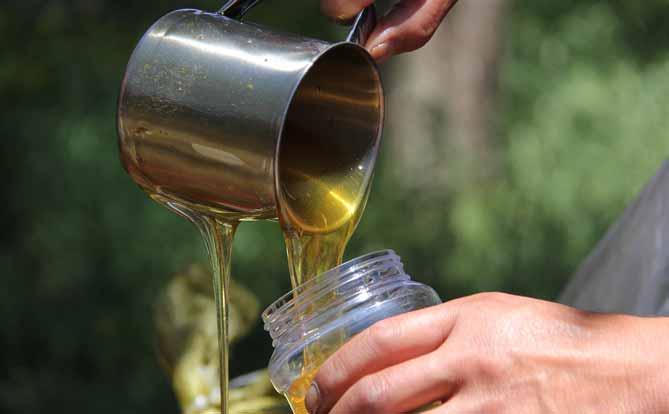 LiFe生活化學,知識文章,蜜蜂,蜂蜜,甜食,花,保存期限,腐壞,外觀,