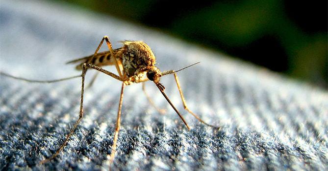 非洲蚊子堡, 知識文章, LiFe生活化學